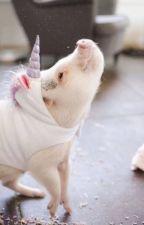 Rant Book d'un cochon-licorne by ArArDeCarglass