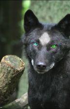 Ho Scelto Te...Forse-L'Alpha dagli occhi di ghiaccio (Sospeso) by Axel_werewolf