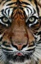 tiger of ranthambore by coloNEL_123