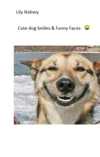 Cute Dog Smiles Funny Faces Lily Ikidney Wattpad