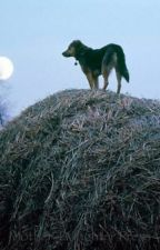 Hay Bales and Dog Slobber by Kitkat_rhodes