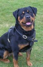 The Abused Rottweiler  by Michele_2005-