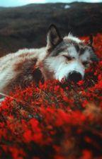 The twilights wolf (Jacob Black fan fic) by alwaysannabella