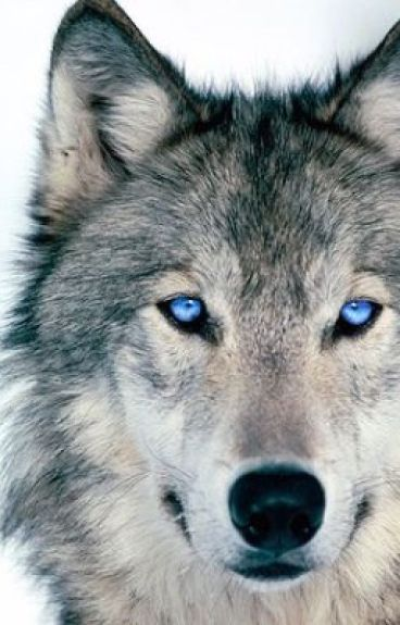 The Blue Eyed Wolf's Power.