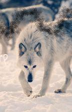 Wolf roleplay by Kthyukii