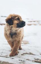 Historia psa, który widział w kolorze by SoniaStadnik
