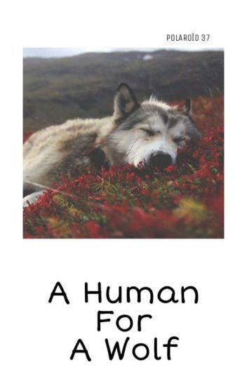 A Human For A Wolf ( Newtmas )