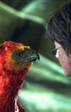 Répliques Cultes Harry Potter  by potterheadhp4ever