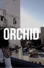 Orchid by astra0