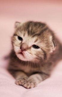 kitten sophie