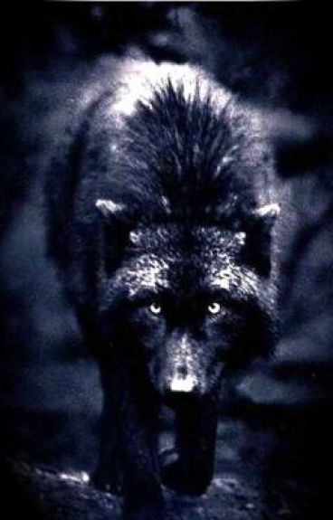 I love you, Wolf.