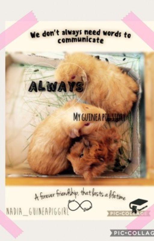 Always. My Guinea Pig Story.  by nadia_guineapiggirl