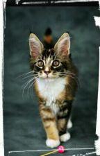 Тайная жизнь  домашних животных by Akevily
