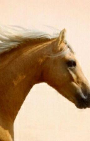 Horses ' Life by Shaky-Mony