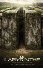 Le Labyrinthe x reader FR ☼Imagine☼ by Noctreena
