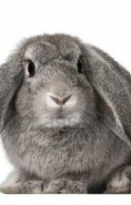 Adventures of Ricky Rabbit by joelgrimespoet