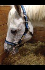 Wild Horse Roleplay (Redo) by xxxTheAftershocKxxx