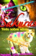 Sakuras: Todo sobre ellas by Koalie_Noe