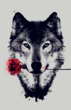 The Silent Wolf (RWBY x Male! Mute! Faunas!Reader) by darkprince171