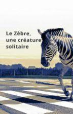 Le zèbre, une créature solitaire by TifaineHeloise15