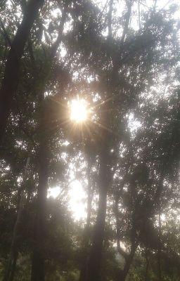 Phân tích đoạn thơ tứ bình trong bài Việt Bắc của Tố Hữu