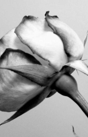 A new rose (Itachi X reader) - ALONDA UCHIHA - Wattpad