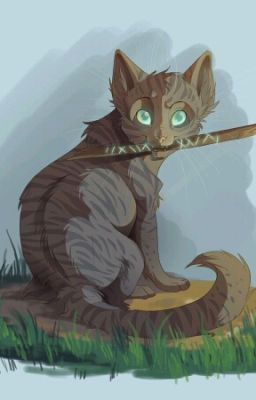 Warrior Cats All Cats