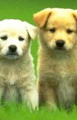 Đọc truyện Con Chó Và Con Chó