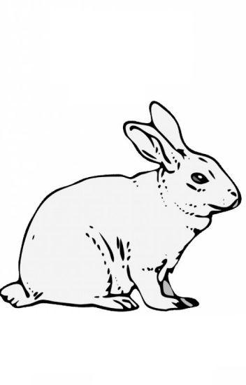 [Uni5 Fanfic] Bạn cùng phòng tôi là thỏ (Nên tôi bất đắc dĩ thành sói)