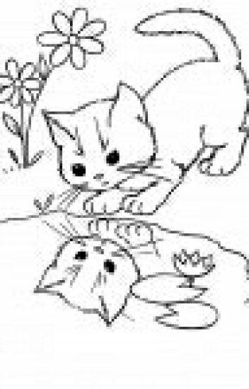 Warrior Cat Oc Wiki Rainstar21 Wattpad