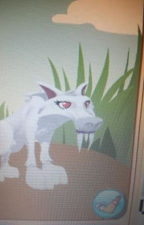 Image of: Jamaa Animal Jam Roleplay Amino Apps Animal Jam Roleplay Crystal Sands Wattpad