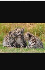 The Last Baby Leopards by Rendie224