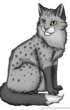 Warrior Cat Polls by FreyaGunning