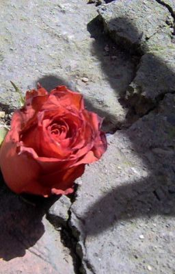 """ The Rose Who Grew On Concrete "" Imitation."