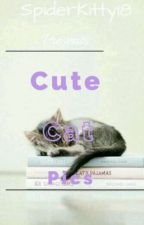 Cute cat pics! by Spiderkitty18