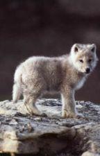 Wolf Escape by Greatsite24