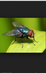 The Pet Fly by JackMalley