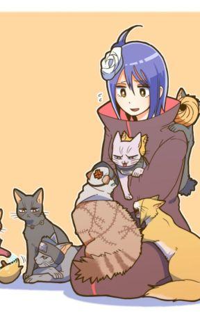 akatsuki cats???? by BLUEwolf122
