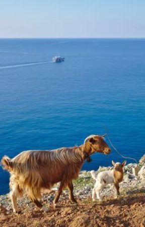 il diario di viaggio di una capra by carlottandpug