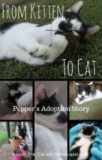 From Kitten to Cat - Pepper's Adoption Story by Pepper_the_cat