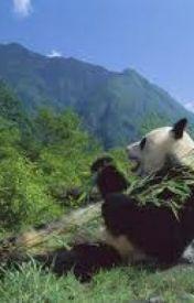 RINGO THE PANDA :) by RingoPop
