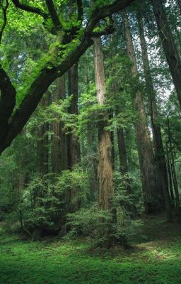 Qua rừng