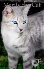 Marily the cat by SoaringEagle11