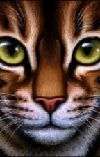 Warrior cat generator! by catlover362