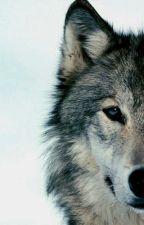 Tajemnica wilczej krwi by kwasniaczka