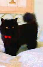Killian Jones, the Pirate That Loves Cats [✔] by JustASadLostGirl