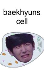 the baeksic unit of life by baekhyunscell