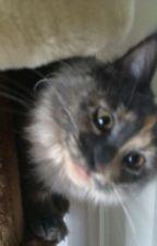 Kitten Life by Spouter