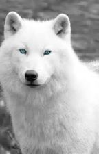 The White Wolf    (bxb) (from other account) ~~Completed~~ by Laxruar