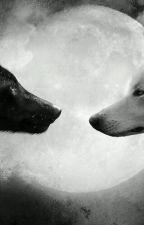 A loba branca e o supremo by Mayumi1206